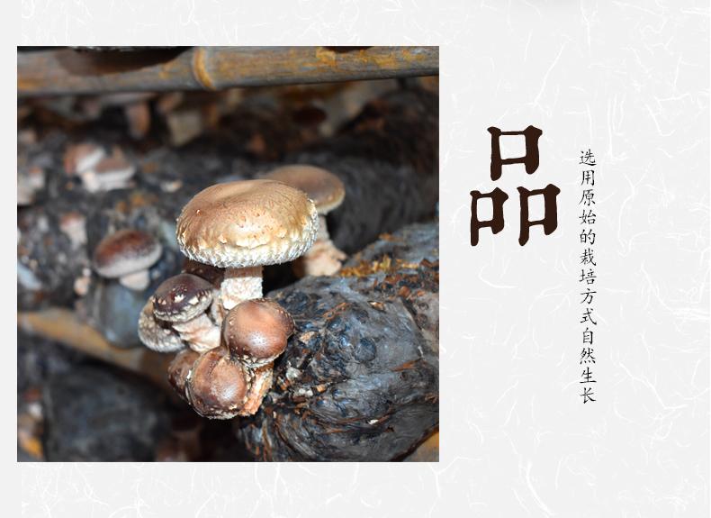 香菇_09.jpg